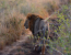 Kruger Discovery Tour