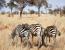 Our Favorite Addo Glamping Safari