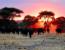 Tanzania: The Eco-Warrior Experience