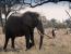 Beautiful Botswana Luxury Immersion