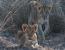 8 Days in Zambia Immersive Safari
