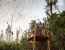 The Great Bat Migration