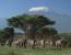 Elephant Paradise: 3 Day Safari
