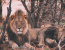 Spoil Yourselves: Luxury Mara Safari
