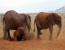 7 Days 6 Nights Best of Kenya Private Wildlife Safari