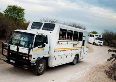 Two overland trucks during safari tour with tourists inside