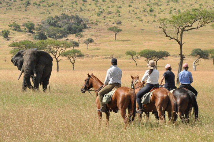 Horseman safari group approaches wild elephant